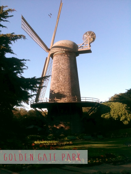 The Dutch Windmill surrounded by the Queen Wilhelmina Tulip Garden, Golden Gate Park, SF.
